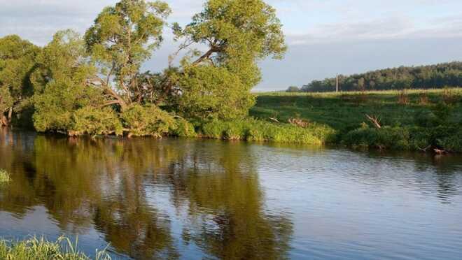 Коттеджный поселок Лес и река