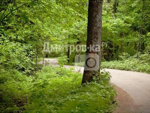 Лесной островок