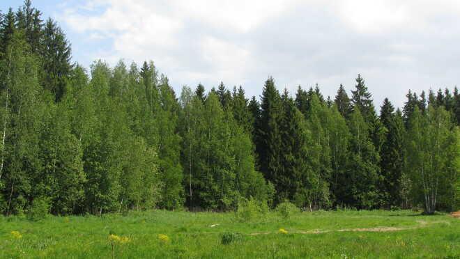 Коттеджный поселок Forest Park (Форест Парк)